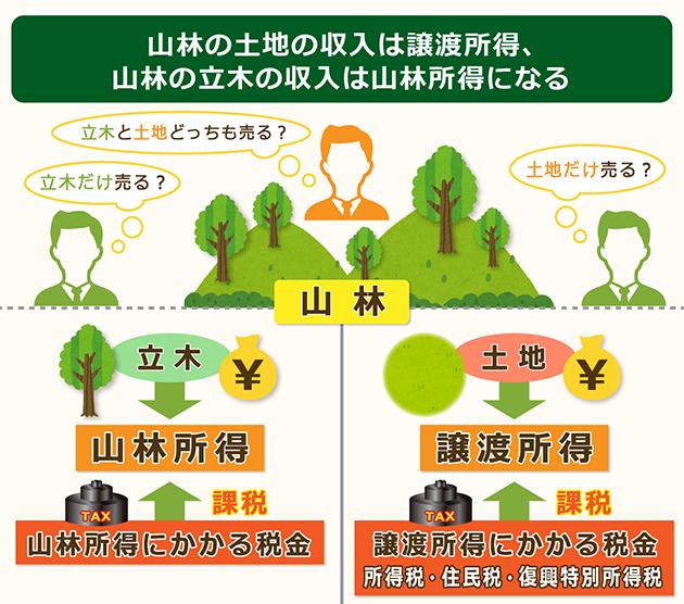 山林の土地の収入は譲渡所得で立木の収入は山林所得になる