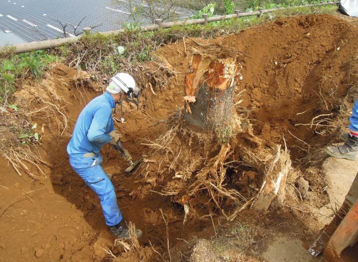 伐採・抜根の作業風景
